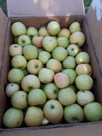 Срочно продам яблоки!!!