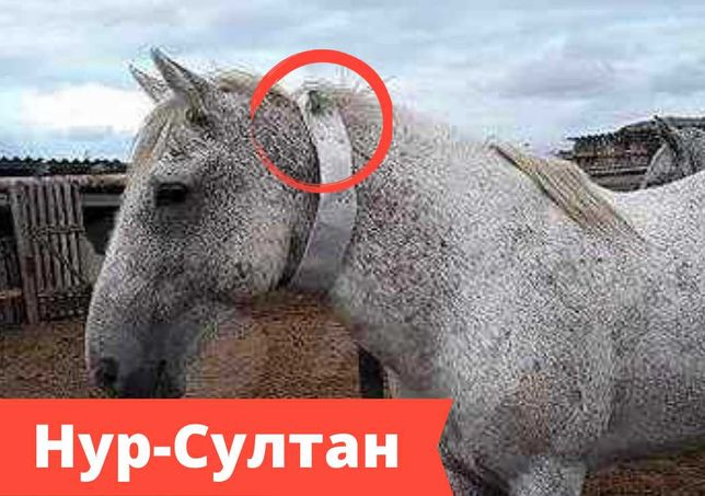 gps трекеры с ошейником для животных и лошадей в Нур-Султане