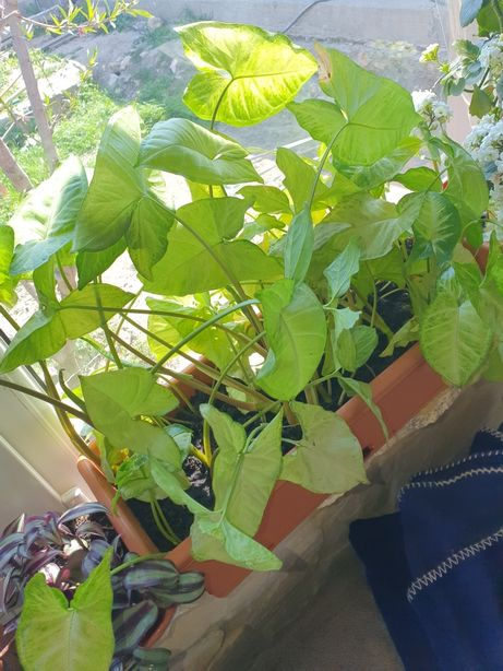 Plante de interior la schimb