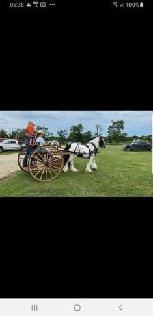 Atelaje pentru cai