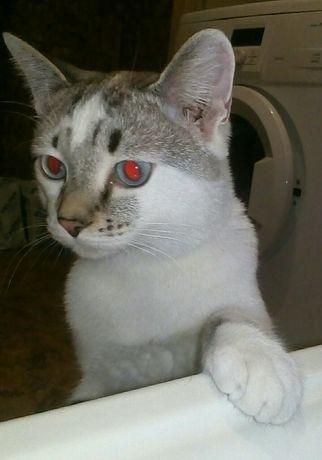 Разыскивается Кот
