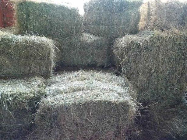 Сатилады тюки и в рулонах сено оптом доставки по всему казахтану б