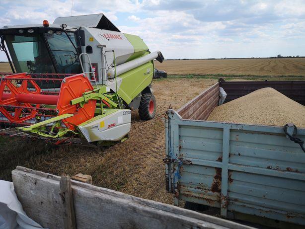 Vând grâu producție 2020