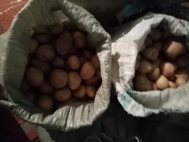 Картофель цена 2500тг(торг)