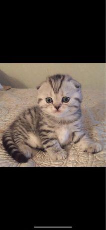 Внимание!В Нурсултане Помет Роскошных Котят