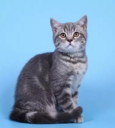 Важная информация-купите 3-х месячного котёнка девочку