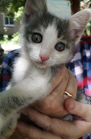 Отдам котёнка кошечку