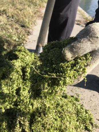 30 кг 1 мешок 500тг зелен для посадки огорода