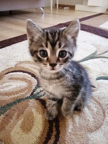 Отдам котят 1.5 мес в добрые руки