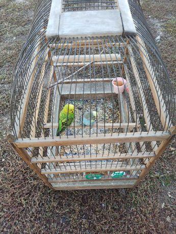 Продам попугаев за 8000 в месте с клеткой