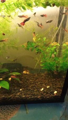 Продам Рыбки для аквариума