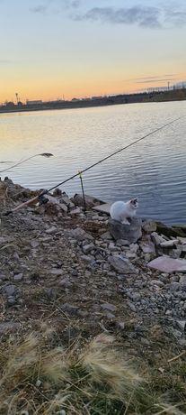 Котенок-девочка любит путешествовать ходить на рыбалку ручная