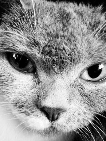 В подарок котенка