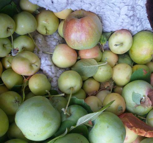 Яблочки домашние