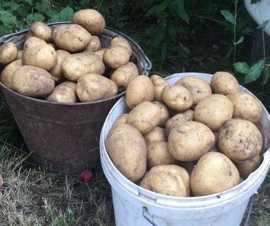 Продам картофель 10л-1800тг