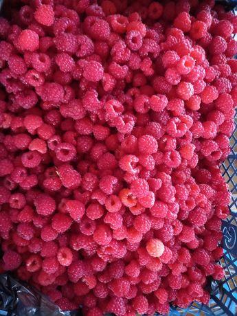 Продам ягоды малины