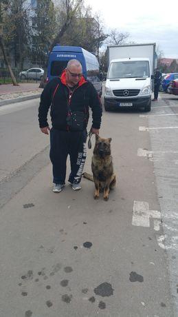 Efectuam servici si educatie canina