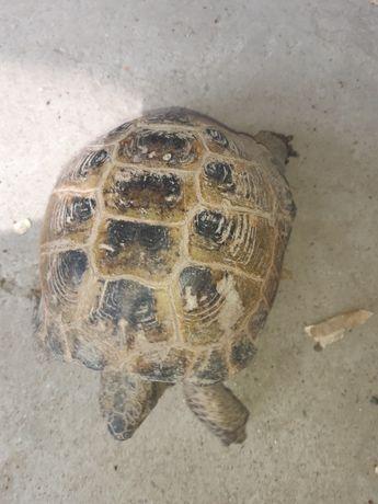 Продам черепаха здоровый