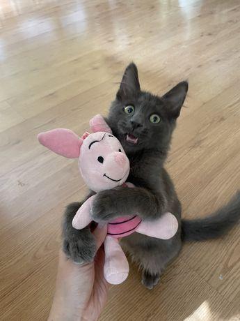 Отдам в добрые забоиливые руки котенка