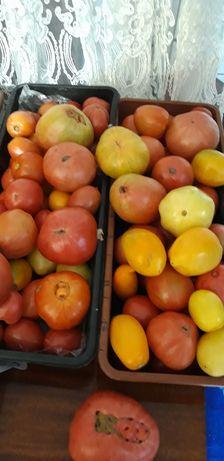 Продам помидоры дачные,на салаты и засолку.