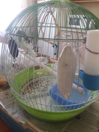 Продам попугай вместе с клеткой