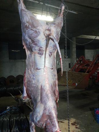 Carne carcasa vițel