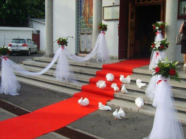 Închiriez porumbei albi pentru nunti