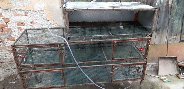 Vand prepelite adulte, custi, incubator-clocitoare