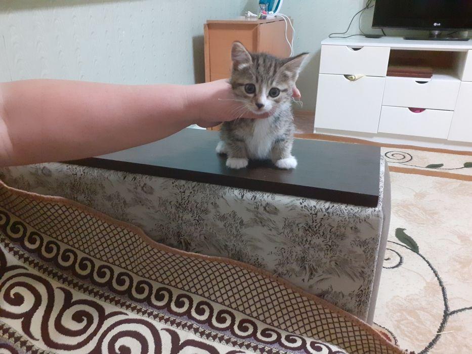Милая девочка котенок Затобольск - изображение 1