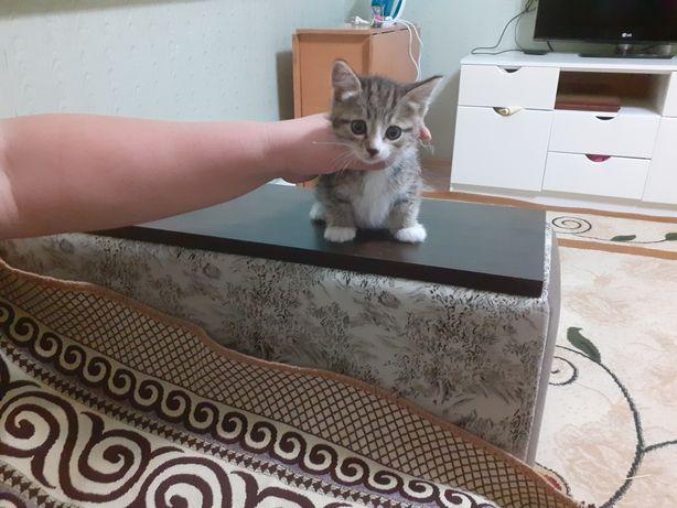 Милая девочка котенок