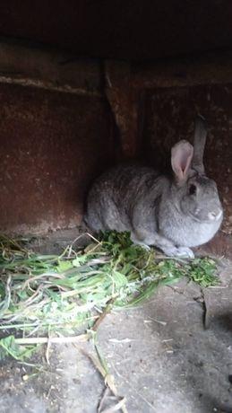 Продам крольчат или обмен