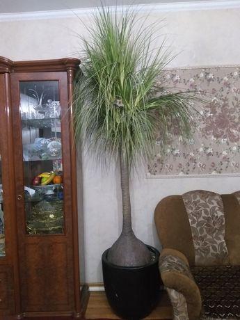 Продам искусственную пальму