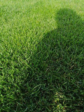 Рулонный газон продажа, укладка, авто полив Туркестан