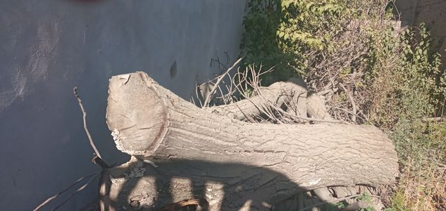 Жаңғақ (ореховое дерево)продается(сатылады)