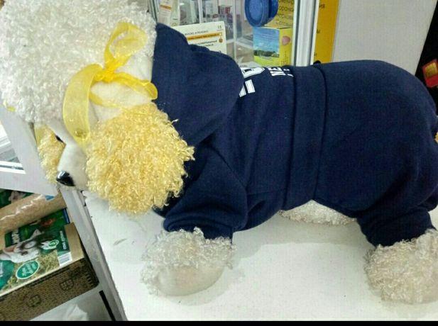 Одежда для животных распродажа в связи с закрытием отдела