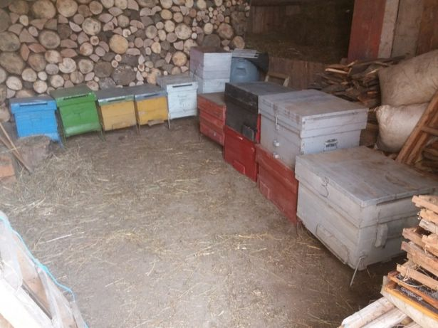 Cutii stup