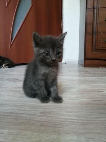 Котята, 4 кота, 1 кошка