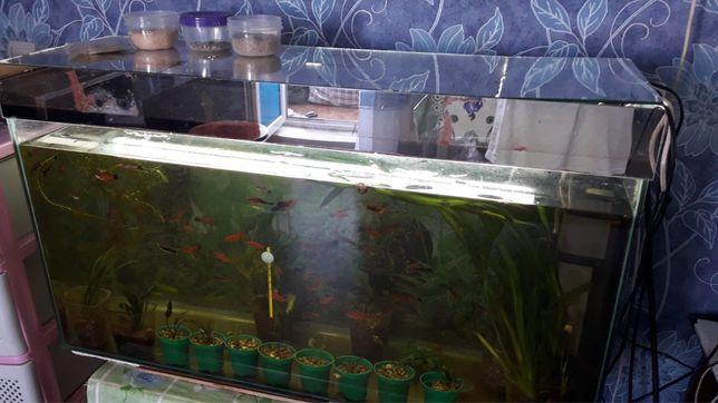 Продам аквариум 150л со всем комплектующим