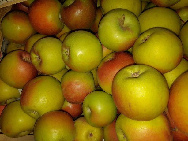 Яблоки, сорт голд раш
