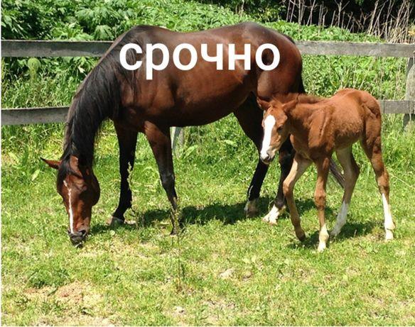Срочно   Кобылы с жеребенком 4 .5 .6 годик