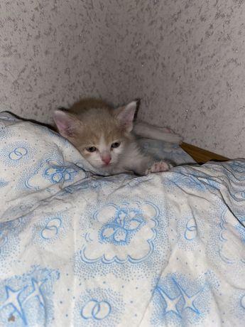В добрые руки котенок(мальчик)