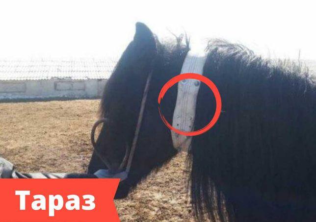 gps трекеры с ошейником для животных и лошадей в Уральске