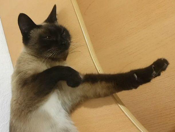 Кошка стерилизованная, с паспортом