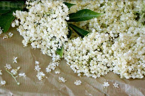 Сушени билки Бъзак плод, Бъз цвят, Шипка, Глог,Коприва, Бял трън