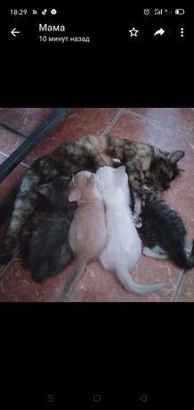Котенок 4-5месячный , мальчик и девочка