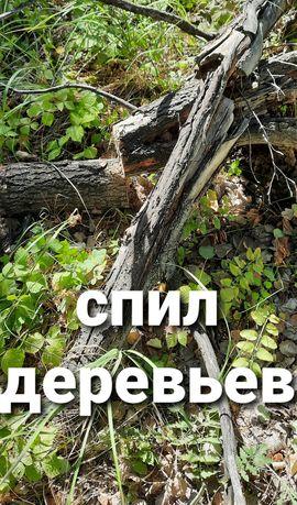 Спилим деревья и ветки!