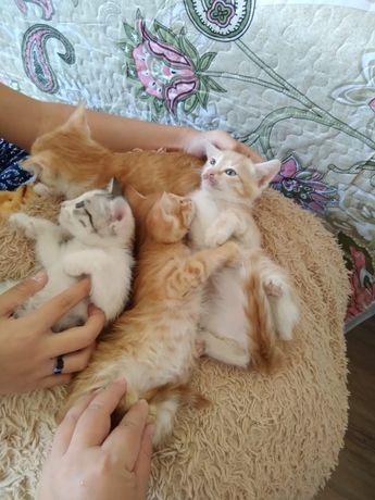Отдам в добрые руки, котята приучены к лотку