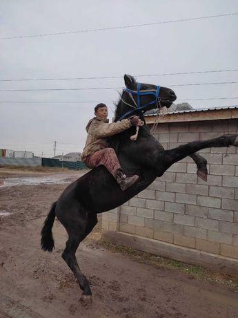 Конь лошадь мерин ат продам или обменяю