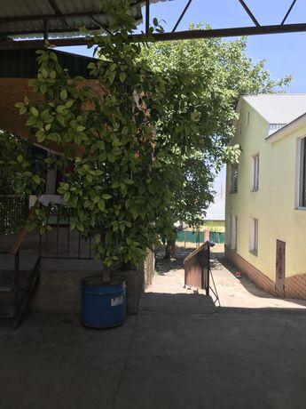 Продам дерево лимона