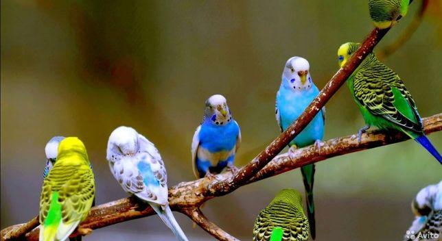 Попугай разные